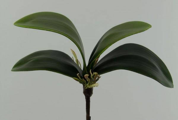 Orchideen-Blattbasis mittel 22x16cm GA künstliche Orchidee Orchideenblätter