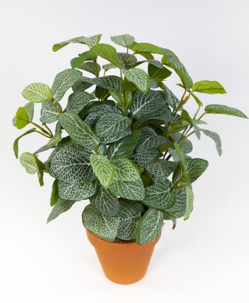 Fittonienpflanze 38cm grün-weiß imt Topf JA Kunstpflanzen künstliche Fittonie Pflanzen Fittonia Mosa