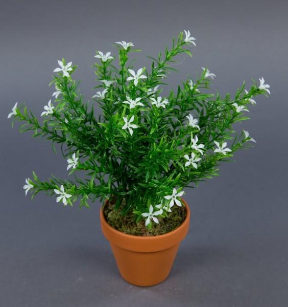 Sternblütenbusch 28cm weiß im Topf GA Kunstpflanzen künstliche Pflanzen Blumen Kunstblumen