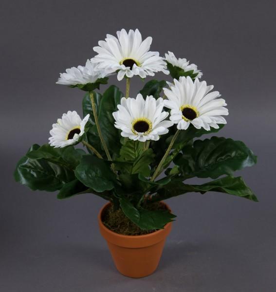 Gerbera 38cm weiß im Topf GA Kunstpflanzen künstliche Pflanze Blumen Kunstblumen
