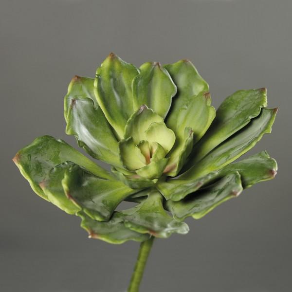 Sukkulente 23cm grün DP Kunstpflanzen künstliche Sukkulenten Pflanzen