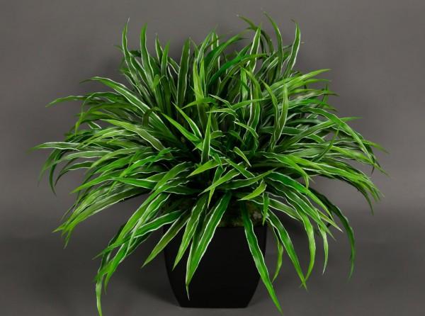 Dracenabusch 48x38cm grün-weiß im schwarzen Dekotopf YF Kunstpflanzen künstliche Dracena Kunstpalmen