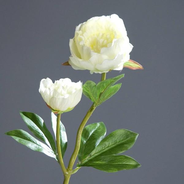Pfingstrose mit 2 Blüten 60cm weiß-creme DP Kunstblumen Seidenblumen künstliche Blumen Päonie