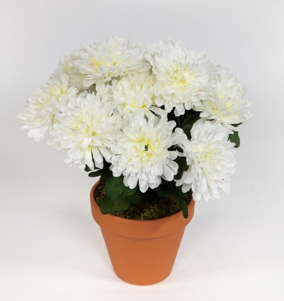 Chrysantheme 30cm weiß im Topf DP Kunstpflanzen künstliche Pflanzen Blumen Kunstblumen