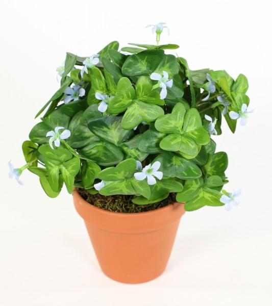Oxalis / Sauerklee Busch 24cm im Topf mit blauen Blüten CG Kunstpflanzen künstliche Pflanzen Blumen