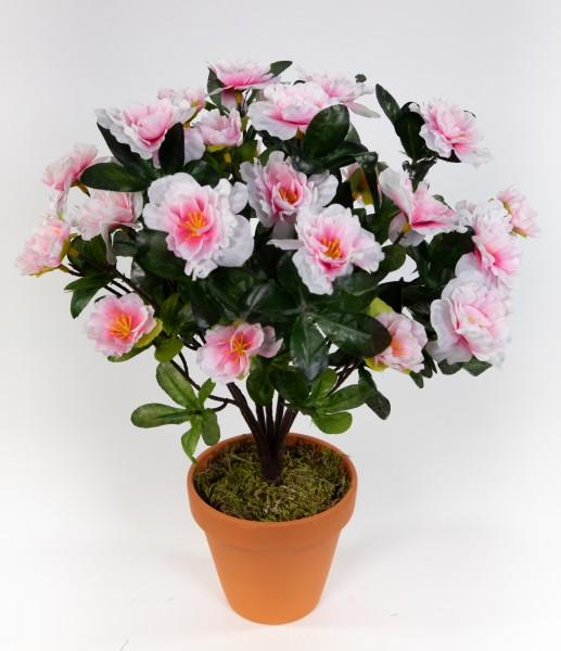 Azalee 34cm pink-weiß im Topf LA künstliche Blumen Pflanzen Kunstpflanzen Kunstblumen Azaleenbusch