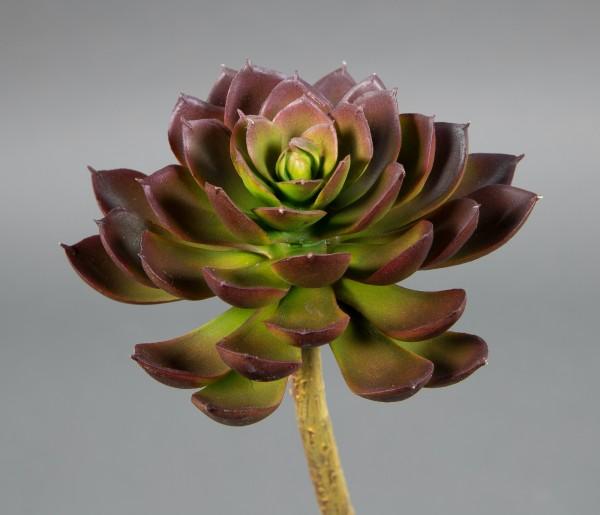 Sukkulente Echeveria 18x12cm rot -ohne Topf- DP Kunstpflanzen künstliche Sukkulenten Pflanze