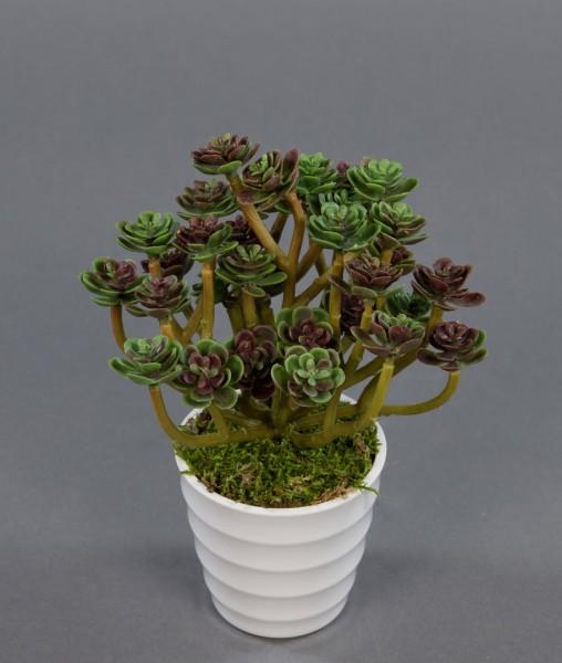 Sukkulente Sempervivum - Hauswurz im weißen Dekotopf 18cm FI Kunstpflanzen künstliche Pflanzen