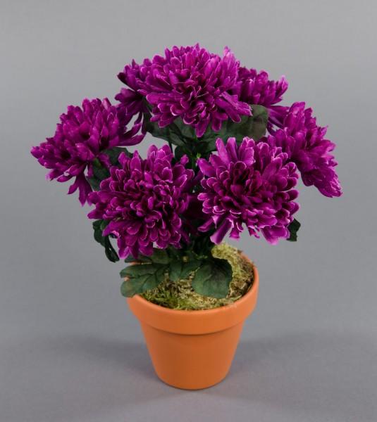 Chrysanthemenbusch 26cm fuchsia im Topf DP Kunstpflanzen künstliche Chrysantheme Pflanzen Blumen