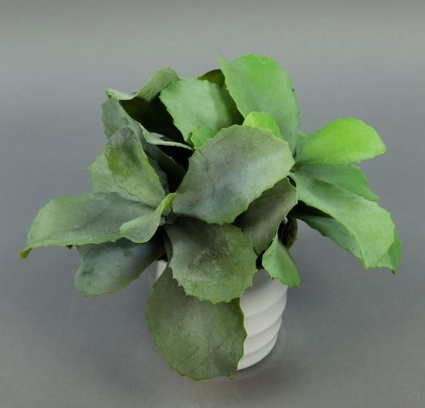 Kalanchoe 24cm im weißen Dekotopf GA künstliche Agave künstliche Pflanzen Kunstpflanzen