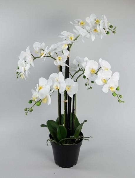 Orchidee 80x50cm Real Touch weiß CG künstliche Orchideen Blumen Kunstpflanzen Kunstblumen