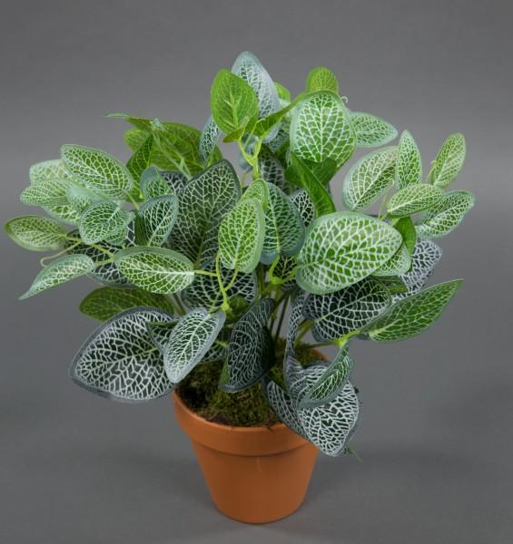 Fittonienbusch 32cm grün-weiß im Topf ZF Kunstpflanzen künstliche Pflanzen Fittonie Mosaikpflanze