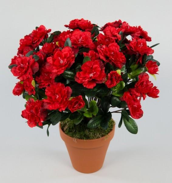 Große Azalee 36cm rot im Topf LA künstliche Blumen Azaleen Kunstpflanzen Kunstblumen Azaleenbusch