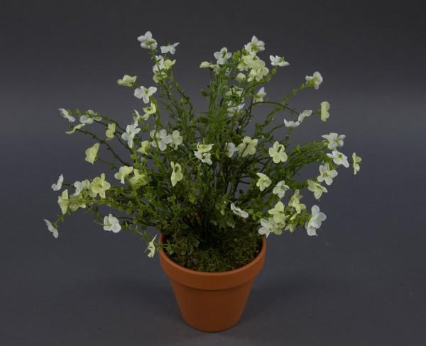 Vergissmeinnicht-Busch 36cm weiß-creme im Topf DP Kunstpflanzen künstliche Blumen Kunstblumen