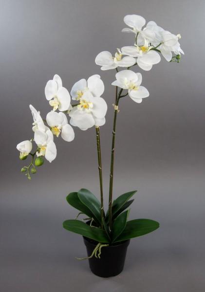 Orchidee 75x40cm Real Touch weiß CG künstliche Orchideen Blumen Kunstpflanzen Kunstblumen