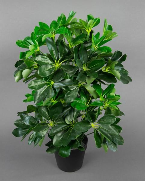 Schefflera 60cm grün im Topf ZJ Kunstpflanzen künstliche Pflanzen Schefflerapflanze