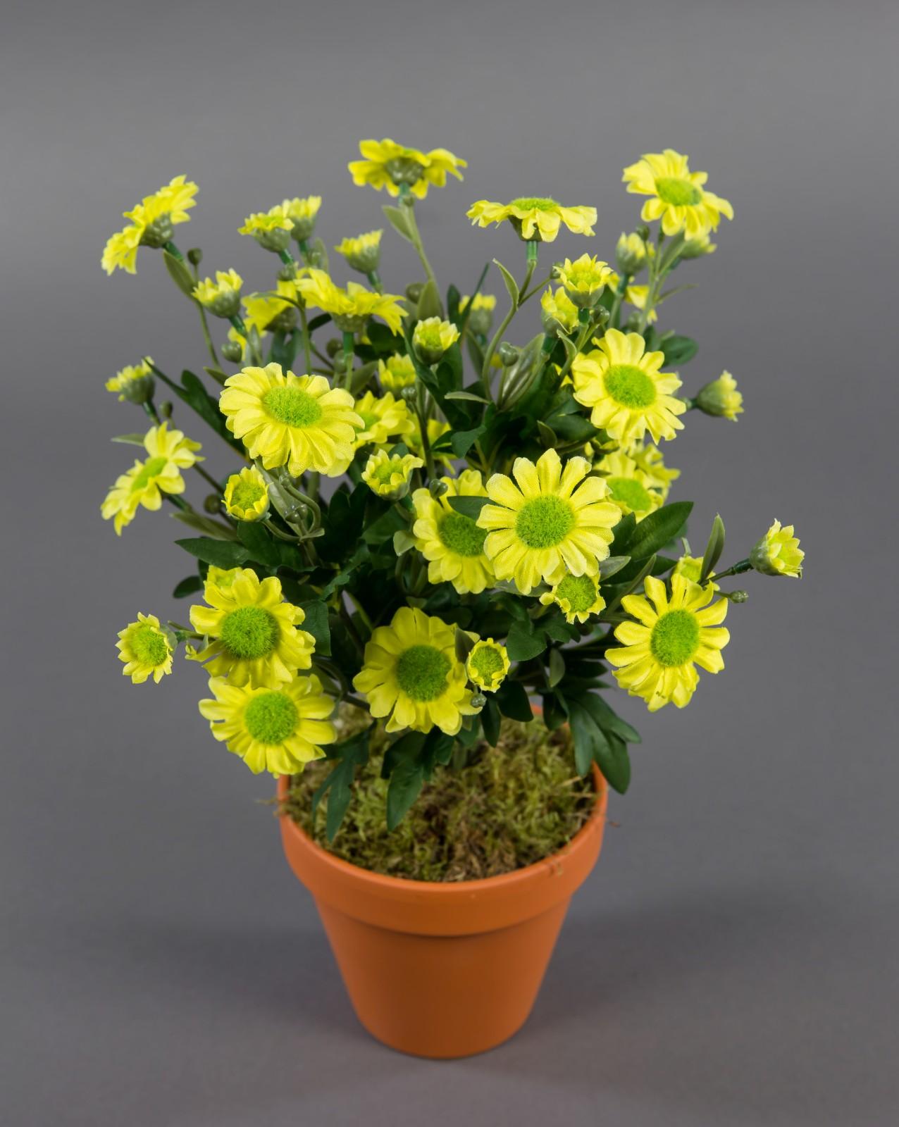 margeritenbusch 32cm gelb im topf zf kunstpflanzen k nstliche margerite pflanze blumen kunstblu. Black Bedroom Furniture Sets. Home Design Ideas