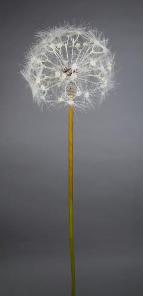 Pusteblume 95cm CG Kunstblumen künstliche Blumen künstliches Pusteblumengras