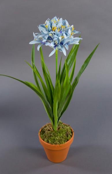 Agapanthus / Schmucklilie 48cm blau im Topf DP Kunstpflanzen künstliche Pflanzen Blumen Kunstblumen-