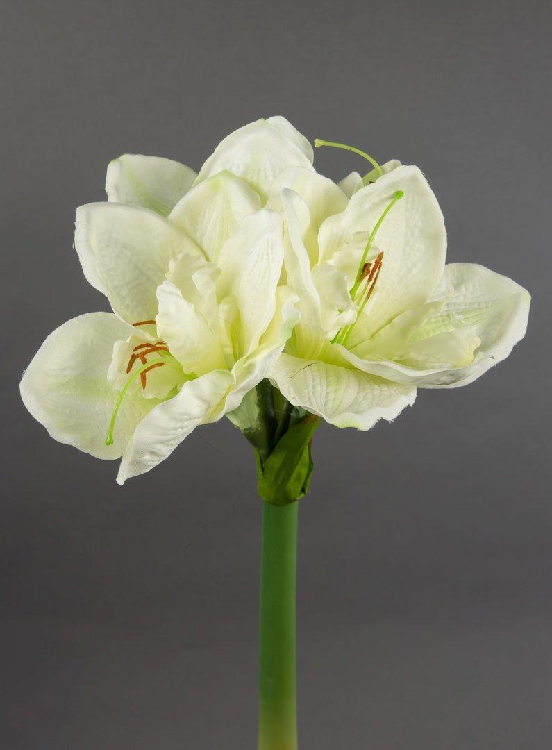 amaryllis 36cm creme wei ga kunstpflanzen seidenblumen k nstliche blumen pflanzen amaryllis. Black Bedroom Furniture Sets. Home Design Ideas