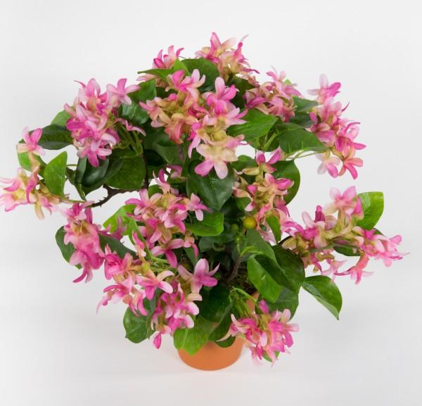 Fliederbusch 36x34cm rosa-pink im Topf ZF Kunstpflanzen Kunstblumen künstliche Blumen Flieder