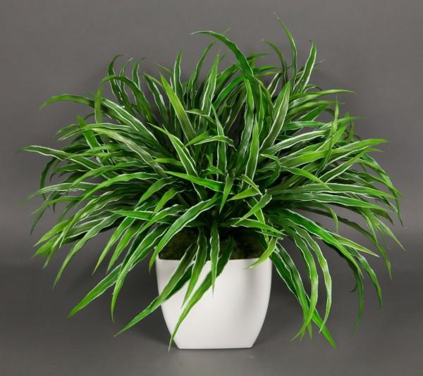 Dracenabusch 48x38cm grün-weiß im weißen Dekotopf YF Kunstpflanzen künstliche Dracena Kunstpalmen