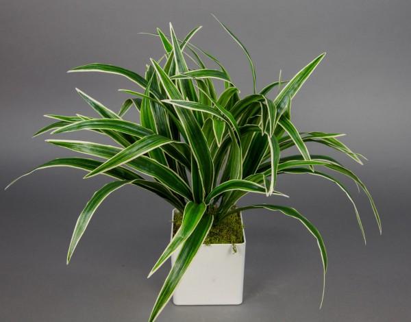 Dracena / Drachenpalme 42x50cm grüngelb im weißen Dekotopf GA künstliche Pflanze Palme Kunstpflanzen