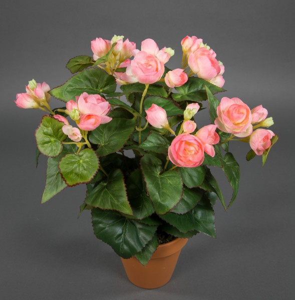 Begonie 38cm rosa im Topf LM Kunstpflanzen künstlicher Begonienbusch künstliche Pflanze Kunstblumen