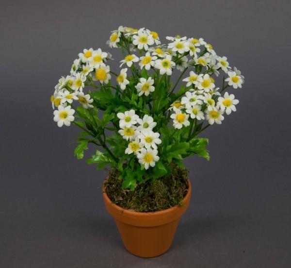 Kamillenbusch 25cm im Topf CG Kunstpflanzen Kunstblumen künstliche Pflanze Kamille