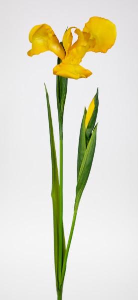 Schwertlilie / Iris 76cm gelb CG Kunstblumen Dekoblumen künstliche Blumen Seidenblumen
