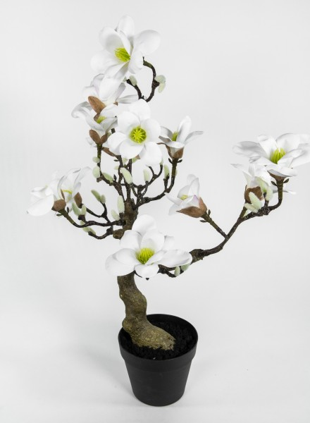 Magnolienbaum Real Touch 75x48x36cm weiß GA Kunstpflanzen Kunstblumen künstliche Magnolie Blumen