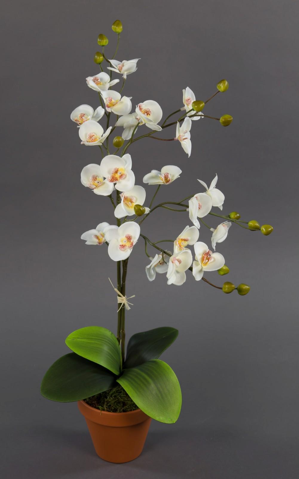 orchidee 60cm wei creme ja k nstliche orchideen blumen. Black Bedroom Furniture Sets. Home Design Ideas