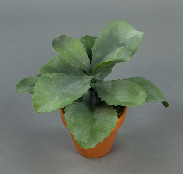 Kalanchoe 18cm im Topf GA künstliche Pflanzen Kunstpflanzen