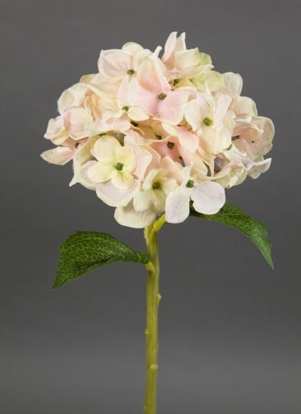 Hortensie Aqua 36cm creme-rosa FT Seidenblumen Kunstlbumen künstliche Blumen Hortensien