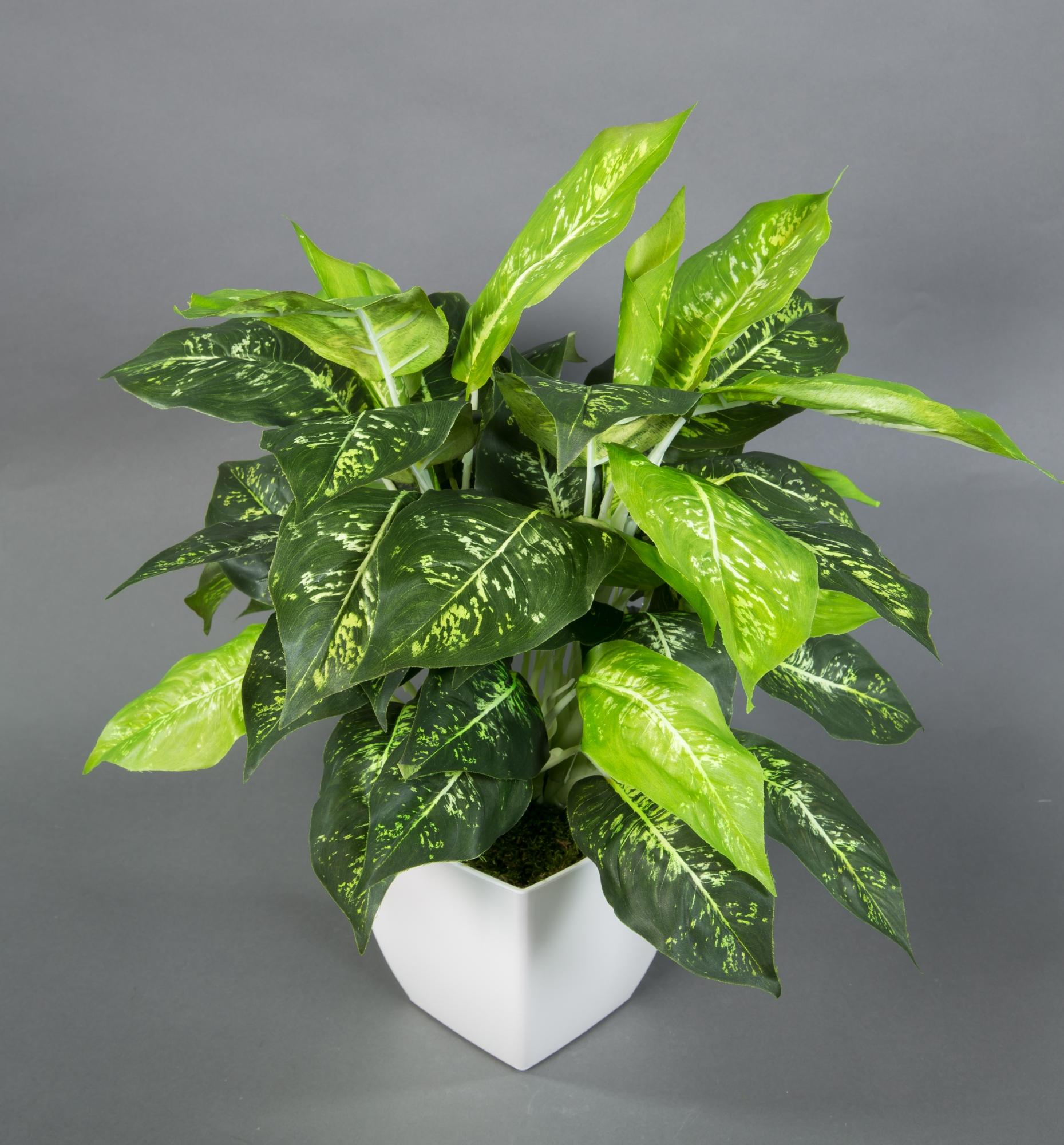 Dieffenbachia Gold Natural Touch 42cm GA Kunstpflanzen künstliche Pflanzen