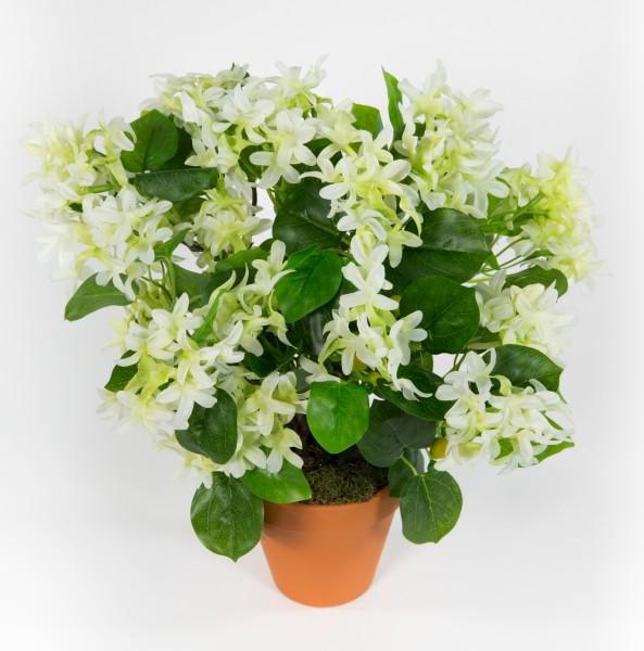 Fliederbusch 36x34cm weiß im Topf ZF Kunstpflanzen Kunstblumen künstliche Pflanzen Blumen Flieder