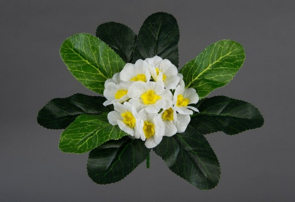 Primelbusch 20cm weiß FI Kunstpflanzen künstliche Primel Pflanzen Blumen Kunstblumen