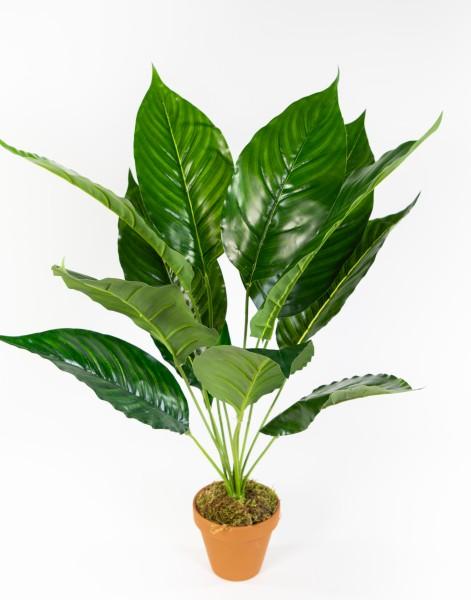 Spathiphyllum Real Touch 50cm im Topf ZJ Kunstpflanzen künstliche Pflanzen
