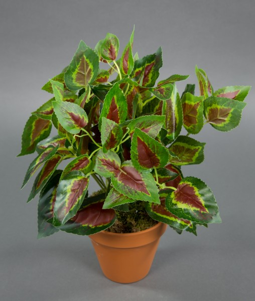 Buntnessel 32cm grün-rot im Topf ZF Kunstpflanzen künstliche Pflanzen Nessel