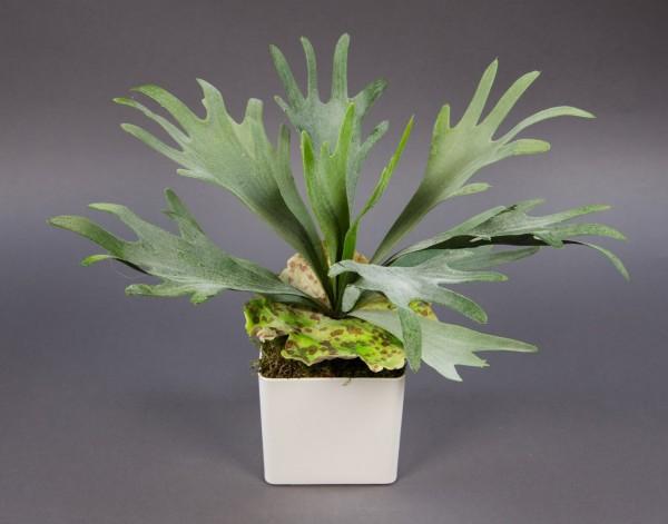 Geweihfarn 36cm im weißen Dekotopf GA Kunstpflanzen Kunstfarn künstlicher Farn Farnbusch
