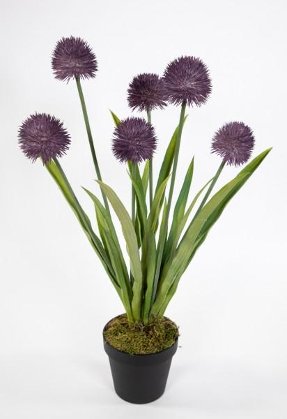 Alliumpflanze 60cm lila im Topf GA Kunstpflanzen Kunstblumen künstliche Pflanzen Blumen Allium