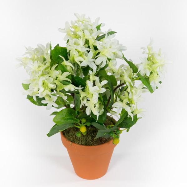 Fliederbusch 32x26cm weiß im Topf ZF Kunstpflanzen Kunstblumen künstlichen Pflanze Blumen Flieder