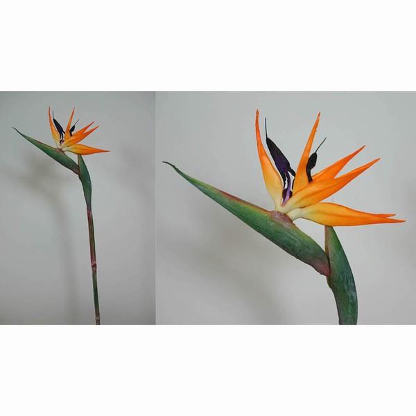 Strelitzie Latex 80cm IG Seidenblumen Paradisvogelblume Kunstblumen
