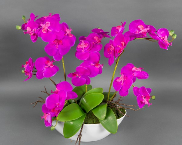 Orchideen-Arrangement 56x55cm fuchsia-pink in weißer Dekoschale GA künstliche Orchideen Kunstblumen