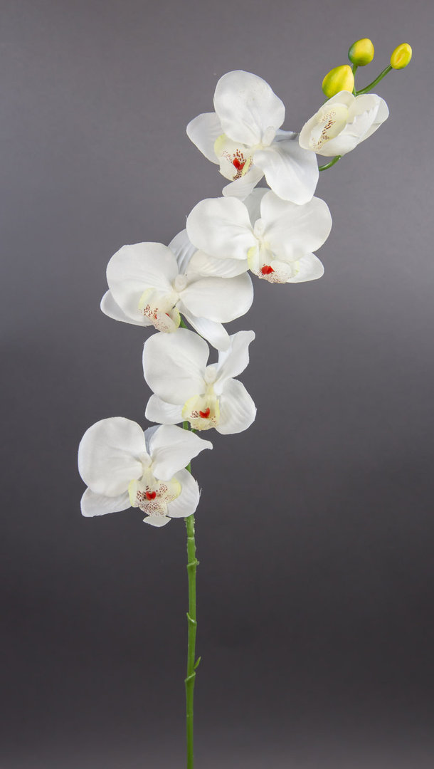 orchideenzweig 72cm wei creme dp kunstblumen k nstliche orchidee orchideen blumen seidenblumen. Black Bedroom Furniture Sets. Home Design Ideas