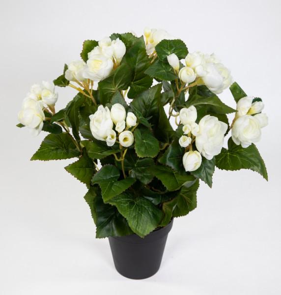 Begonie 38cm weiß im Topf LM Kunstpflanzen künstlicher Begonienbusch künstliche Pflanze Kunstblumen