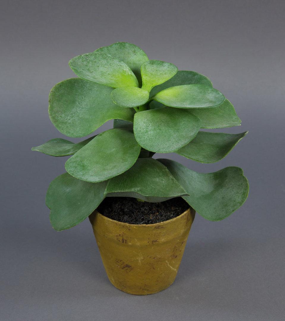 sukkulente affenbaum 24x22cm im topf pf k nstliche pflanzen sukkulenten kunstpflanzen. Black Bedroom Furniture Sets. Home Design Ideas