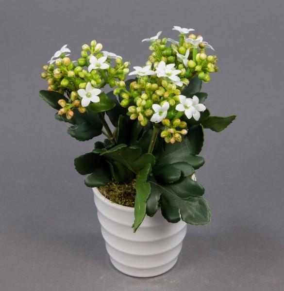 Kalanchoe 16cm weiß im weißen Dekotopf CG Kunstpflanzen Kunstblumen künstliche Blumen