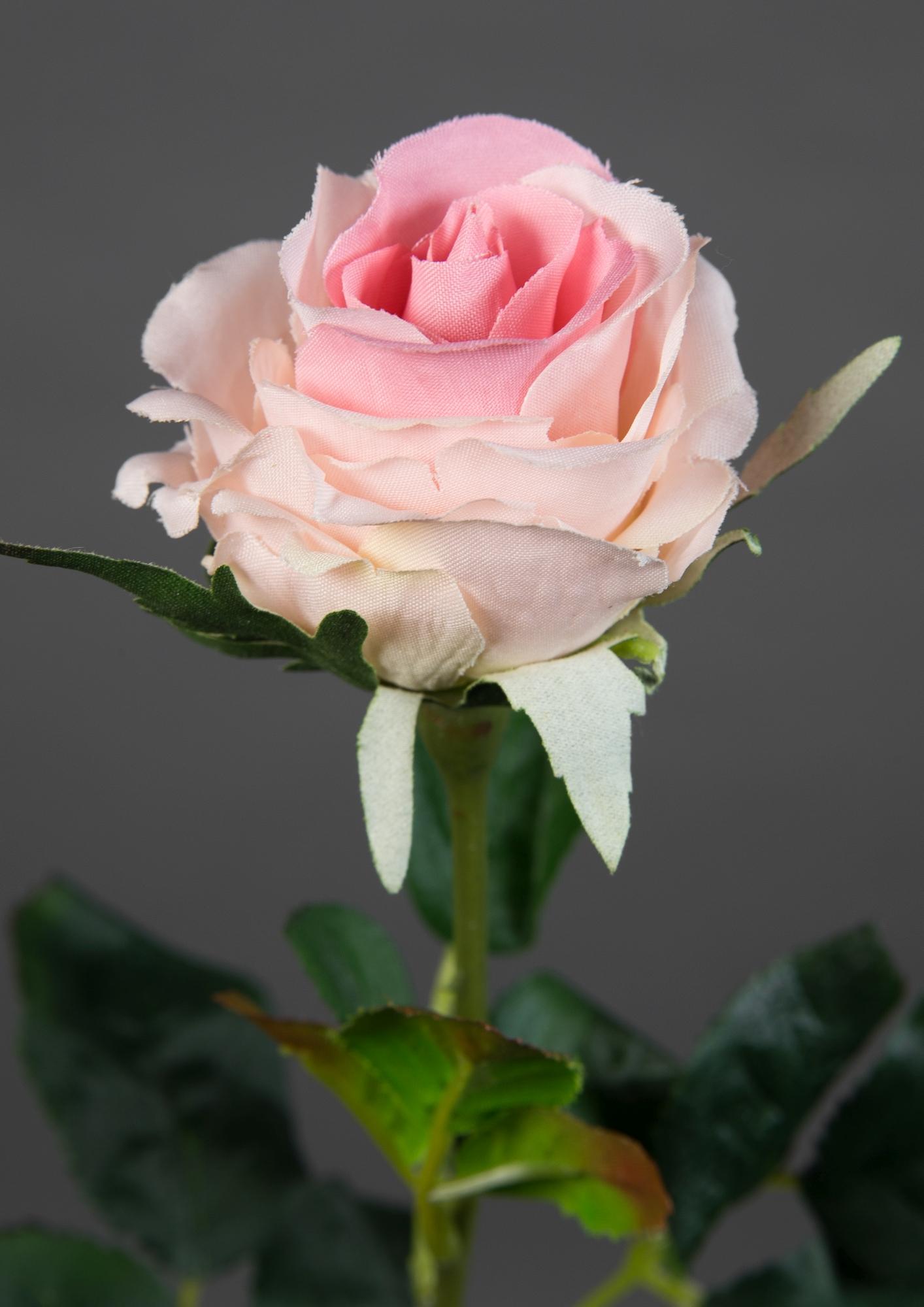 12 Stück Rose Elena 45cm weiß PM Kunstblumen künstliche Blumen Rosen