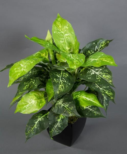 Dieffenbachia 50x40cm im schwarzen Dekotopf ZF Kunstpflanzen künstliche Pflanzen